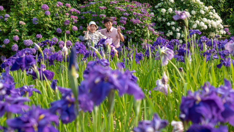 特別養護老人ホームふたみ苑が「しょうぶ園」へお出かけしました!