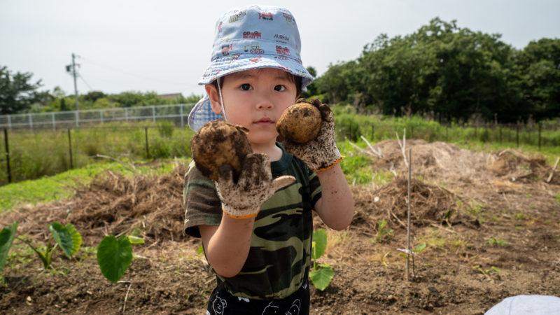 大きなじゃがいもが大豊作!グローバルキッズルームうがたでじゃがいもを収穫しました!